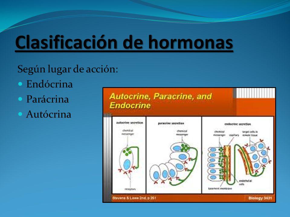 Clasificación de hormonas Según lugar de acción: Endócrina Parácrina Autócrina