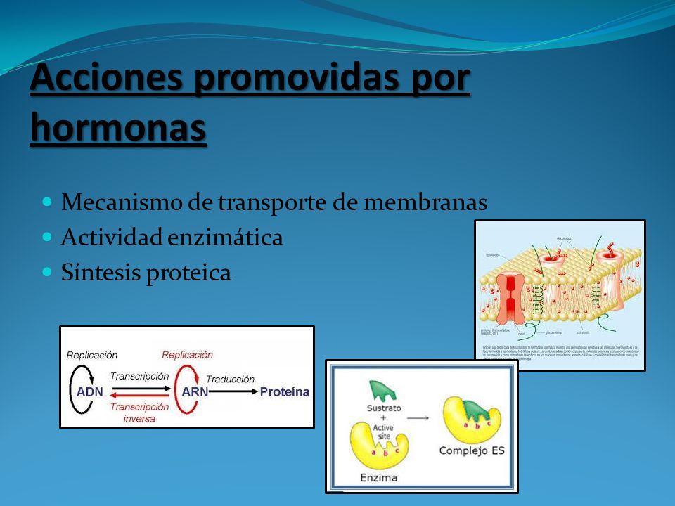 Acciones promovidas por hormonas Mecanismo de transporte de membranas Actividad enzimática Síntesis proteica