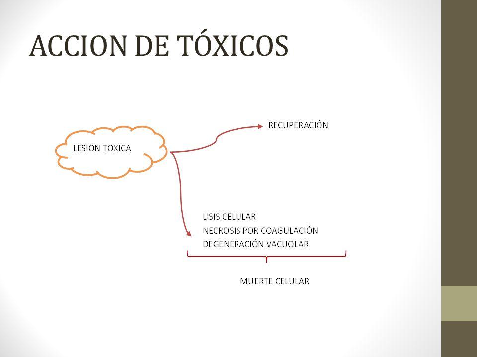 ACCION DE TÓXICOS