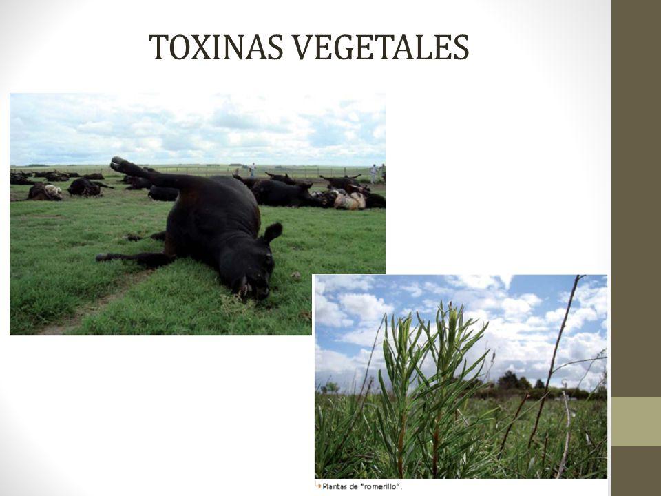 TOXINAS VEGETALES