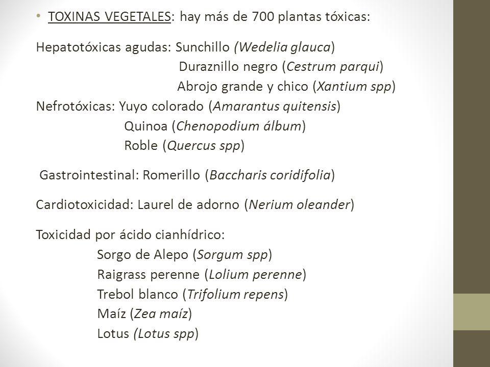 TOXINAS VEGETALES: hay más de 700 plantas tóxicas: Hepatotóxicas agudas: Sunchillo (Wedelia glauca) Duraznillo negro (Cestrum parqui) Abrojo grande y