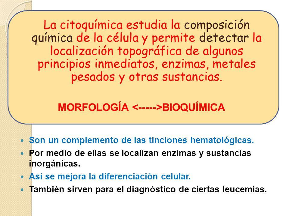 CITOMORFOLOGIA.70-80% CITOQUIMICA.90-95% INMUNOFENOTIPO MICROSC.