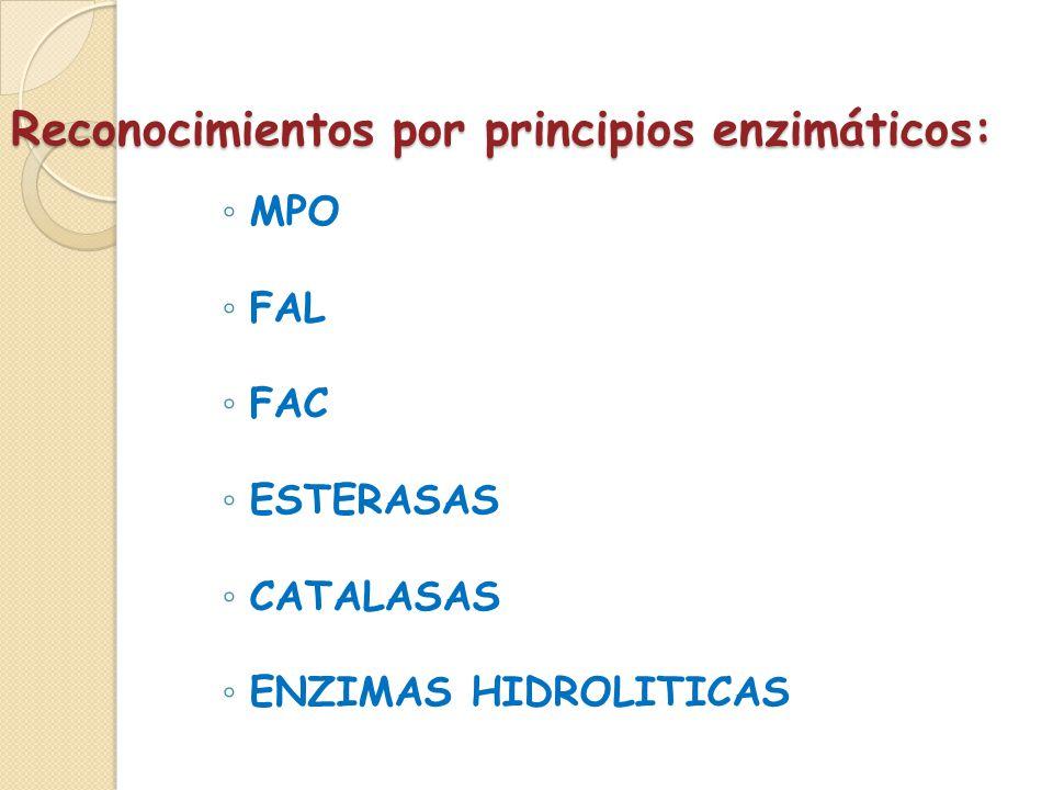 Reconocimientos por principios enzimáticos: MPO FAL FAC ESTERASAS CATALASAS ENZIMAS HIDROLITICAS