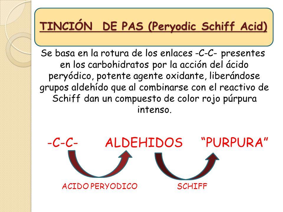 TINCIÓN DE PAS (Peryodic Schiff Acid) Se basa en la rotura de los enlaces -C-C- presentes en los carbohidratos por la acción del ácido peryódico, pote