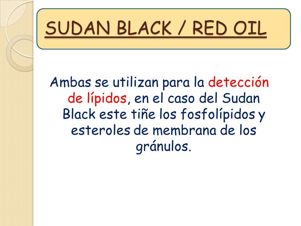 SUDAN BLACK / RED OIL Ambas se utilizan para la detección de lípidos, en el caso del Sudan Black este tiñe los fosfolípidos y esteroles de membrana de