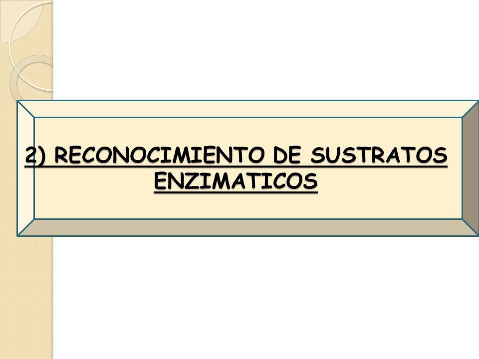 2) RECONOCIMIENTO DE SUSTRATOS ENZIMATICOS