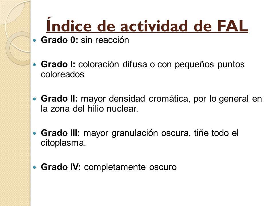 Índice de actividad de FAL Grado 0: sin reacción Grado I: coloración difusa o con pequeños puntos coloreados Grado II: mayor densidad cromática, por l