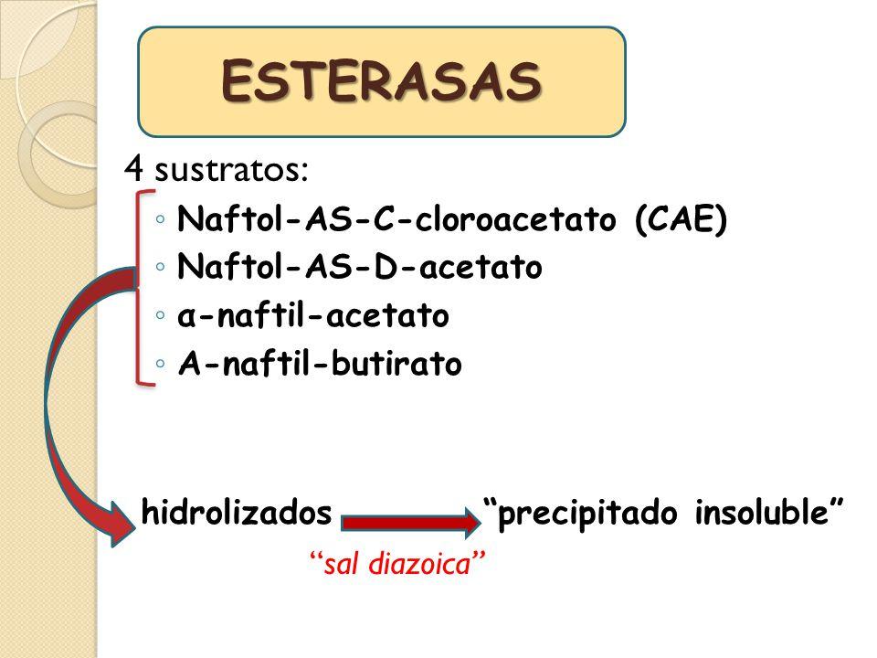 4 sustratos: Naftol-AS-C-cloroacetato (CAE) Naftol-AS-D-acetato α-naftil-acetato Α-naftil-butirato hidrolizados precipitado insoluble sal diazoica EST