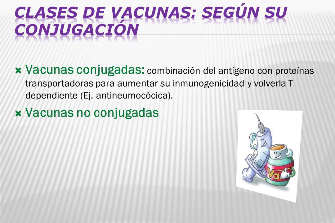 Vacunas conjugadas: combinación del antígeno con proteínas transportadoras para aumentar su inmunogenicidad y volverla T dependiente (Ej. antineumocóc