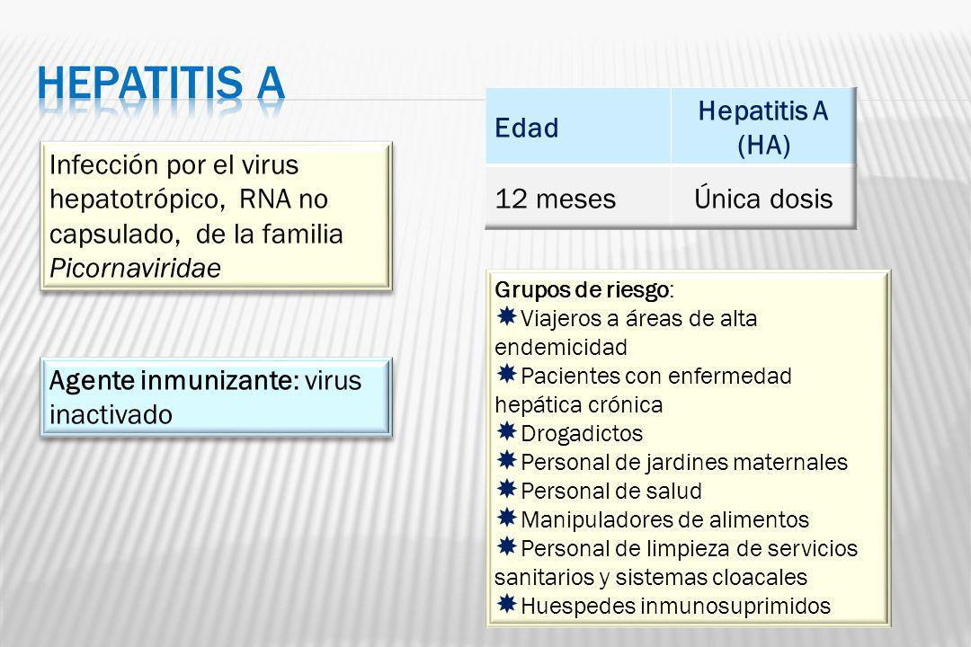 Infección por el virus hepatotrópico, RNA no capsulado, de la familia Picornaviridae Agente inmunizante: virus inactivado Grupos de riesgo: Viajeros a