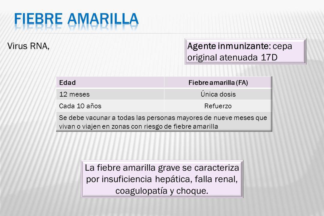 Virus RNA, La fiebre amarilla grave se caracteriza por insuficiencia hepática, falla renal, coagulopatía y choque. Agente inmunizante: cepa original a