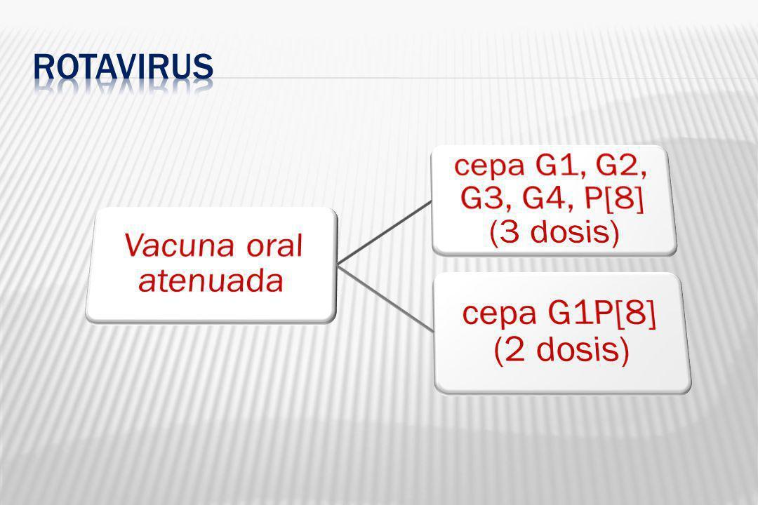 Familia Rhabdoviridae,género Lyssavirus, ARN envuelto Produce una encefalomielitis viral aguda, casi siempre mortal Vacuna CRL: suspension de cerebro raton lactante de menos de 1 dia de vida que contiene 3 cepas distintas del virus rabico: CVS, 51 y 91 inactivados.