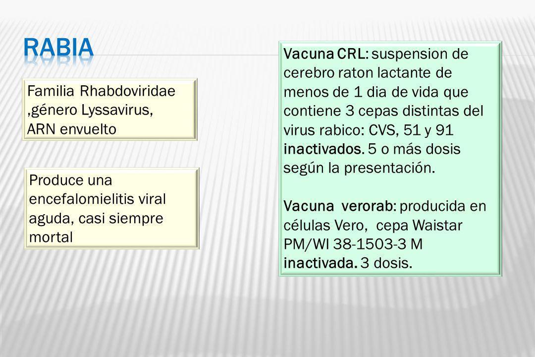 Familia Rhabdoviridae,género Lyssavirus, ARN envuelto Produce una encefalomielitis viral aguda, casi siempre mortal Vacuna CRL: suspension de cerebro