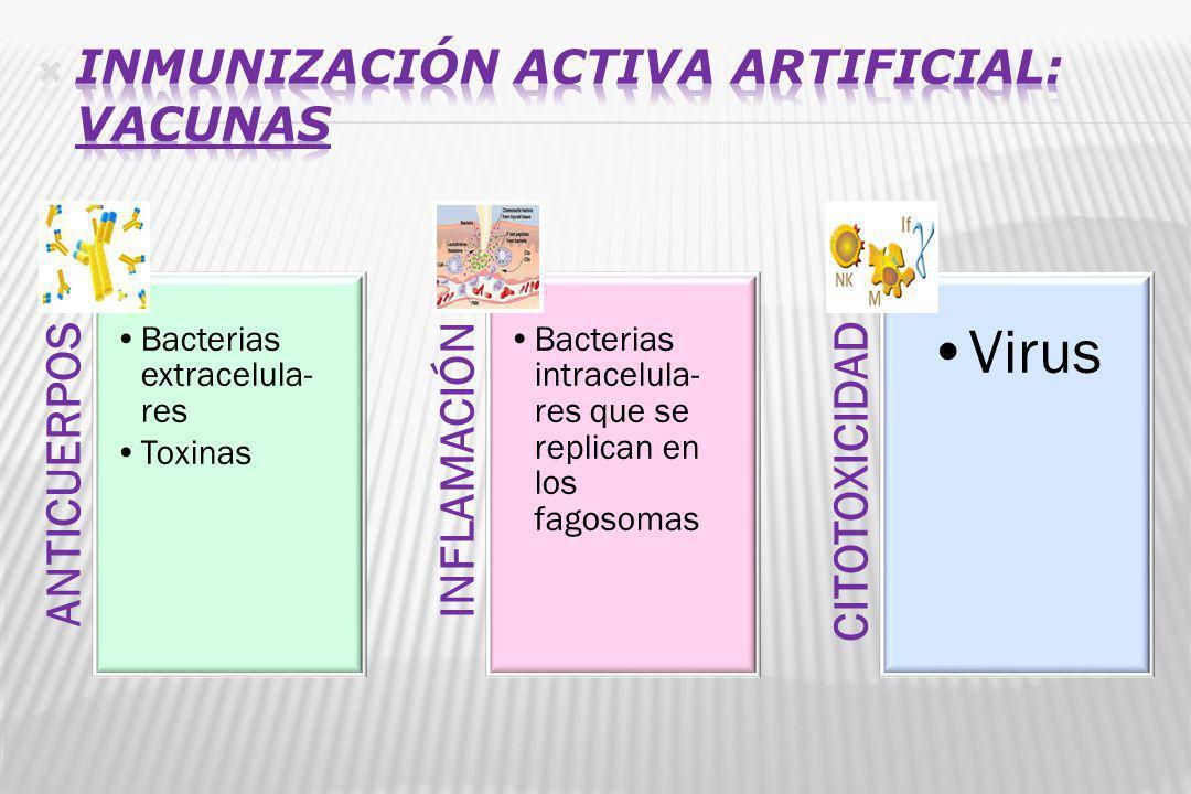 ANTICUERPOS Bacterias extracelula- res Toxinas INFLAMACIÓN Bacterias intracelula- res que se replican en los fagosomas CITOTOXICIDAD Virus
