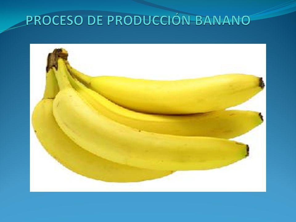 Identificación de la edad de la fruta: Es permitir conocer la edad y cantidad de racimos presentes en cada lote de la finca.