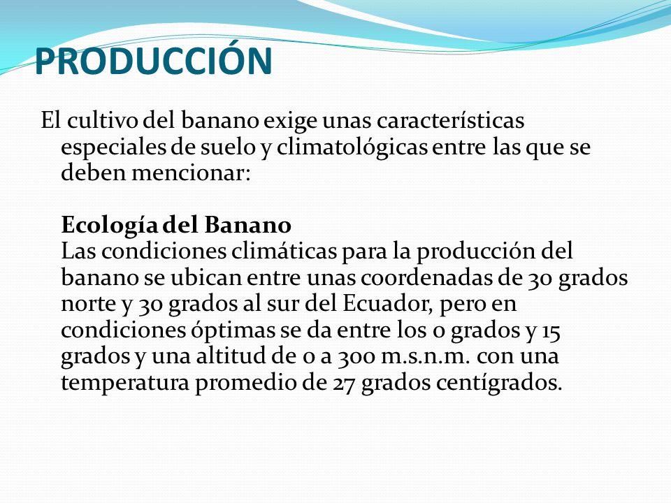 PRODUCCIÓN El cultivo del banano exige unas características especiales de suelo y climatológicas entre las que se deben mencionar: Ecología del Banano Las condiciones climáticas para la producción del banano se ubican entre unas coordenadas de 30 grados norte y 30 grados al sur del Ecuador, pero en condiciones óptimas se da entre los 0 grados y 15 grados y una altitud de 0 a 300 m.s.n.m.