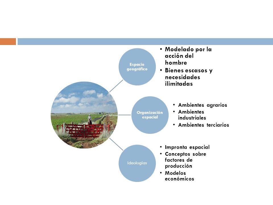 Geografía económica Geografía agraria Geografía del comercio internacional Geografía de las actividades Geografía de los recursos