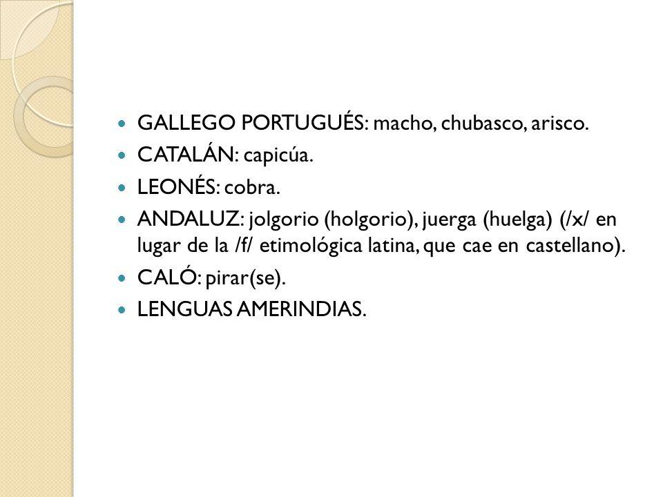 GALLEGO PORTUGUÉS: macho, chubasco, arisco. CATALÁN: capicúa. LEONÉS: cobra. ANDALUZ: jolgorio (holgorio), juerga (huelga) (/x/ en lugar de la /f/ eti