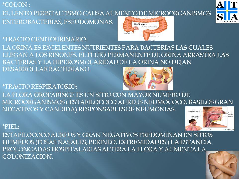 *COLON : EL LENTO PERISTALTISMO CAUSA AUMENTO DE MICROORGANISMOS ENTEROBACTERIAS, PSEUDOMONAS.
