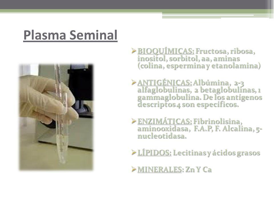 El objetivo principal del examen biológico es detectar la presencia de semen en las muestras recogidas, como prueba de actividad sexual. El semen tien