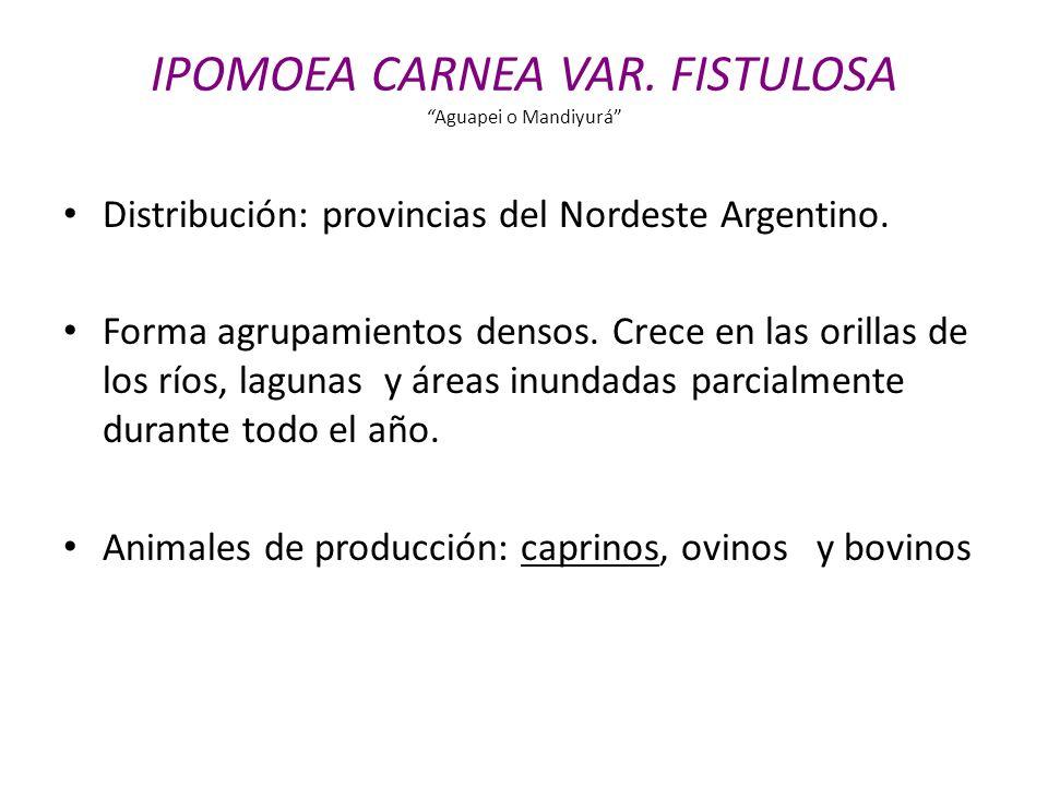 Distribución: provincias del Nordeste Argentino. Forma agrupamientos densos. Crece en las orillas de los ríos, lagunas y áreas inundadas parcialmente