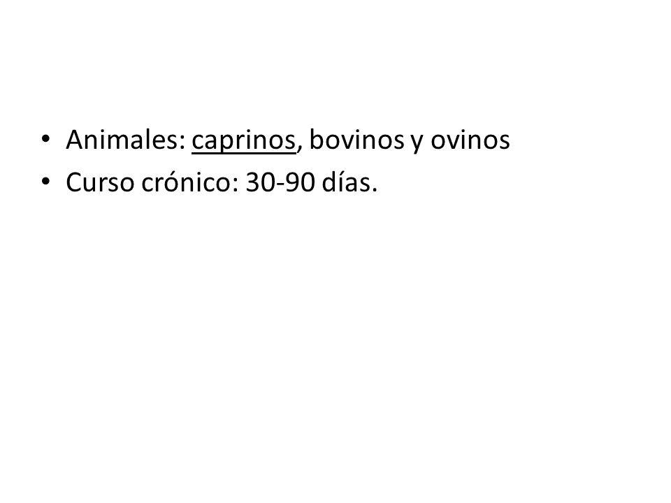 Animales: caprinos, bovinos y ovinos Curso crónico: 30-90 días.