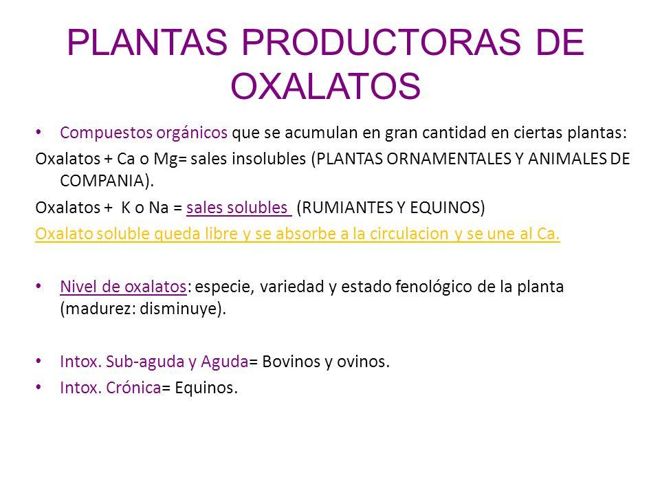 PLANTAS PRODUCTORAS DE OXALATOS Compuestos orgánicos que se acumulan en gran cantidad en ciertas plantas: Oxalatos + Ca o Mg= sales insolubles (PLANTA