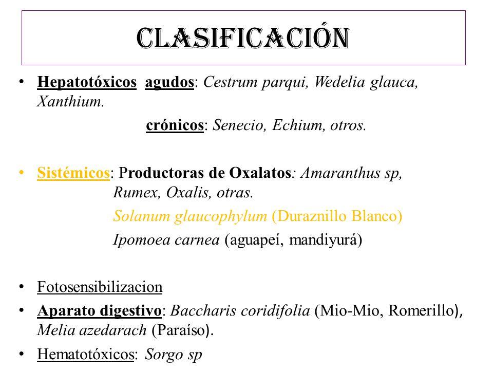 CLASIFICACIÓN Hepatotóxicos agudos: Cestrum parqui, Wedelia glauca, Xanthium. crónicos: Senecio, Echium, otros. Sistémicos: Productoras de Oxalatos: A