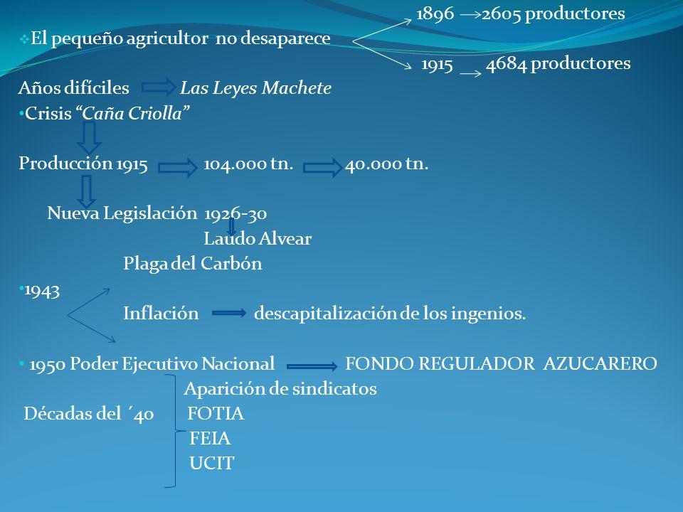 1896 2605 productores El pequeño agricultor no desaparece 1915 4684 productores Años difíciles Las Leyes Machete Crisis Caña Criolla Producción 1915 104.000 tn.