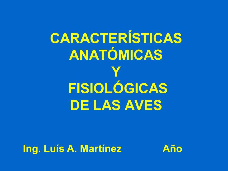 CARACTERÍSTICAS ANATÓMICAS Y FISIOLÓGICAS DE LAS AVES Ing. Luís A. Martínez Año