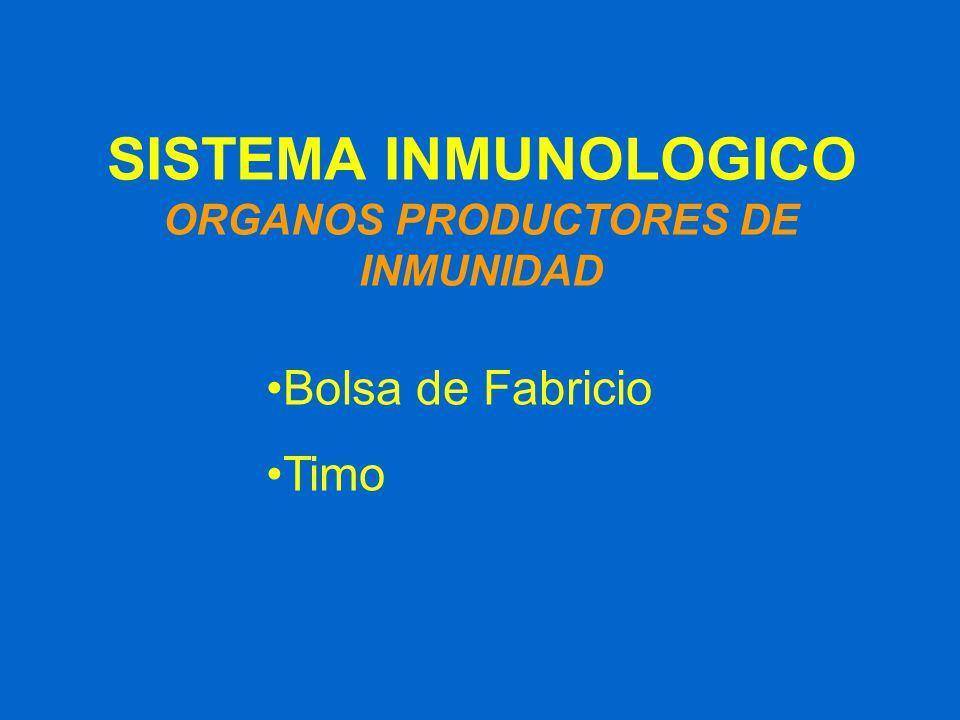 SISTEMA INMUNOLOGICO ORGANOS PRODUCTORES DE INMUNIDAD Bolsa de Fabricio Timo
