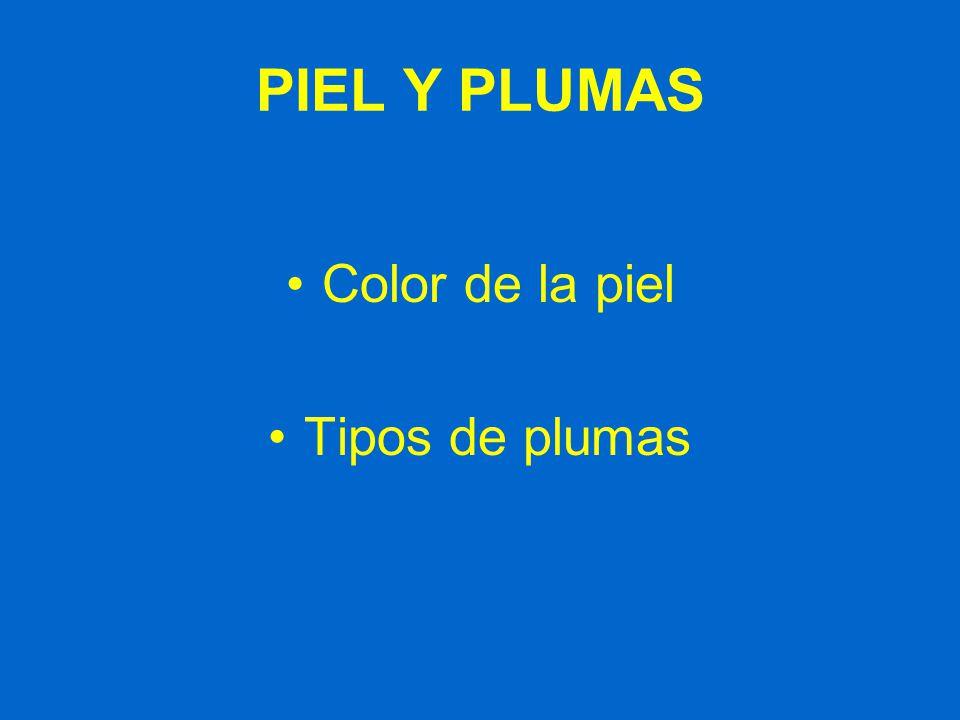 PIEL Y PLUMAS Color de la piel Tipos de plumas