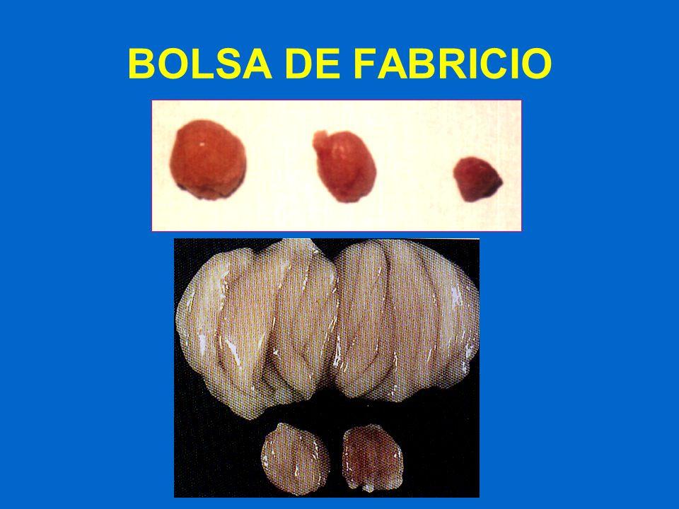 BOLSA DE FABRICIO