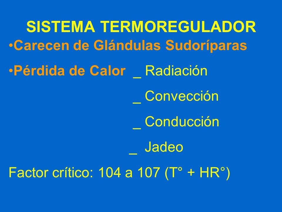 SISTEMA TERMOREGULADOR Carecen de Glándulas Sudoríparas Pérdida de Calor _ Radiación _ Convección _ Conducción _ Jadeo Factor crítico: 104 a 107 (T° +