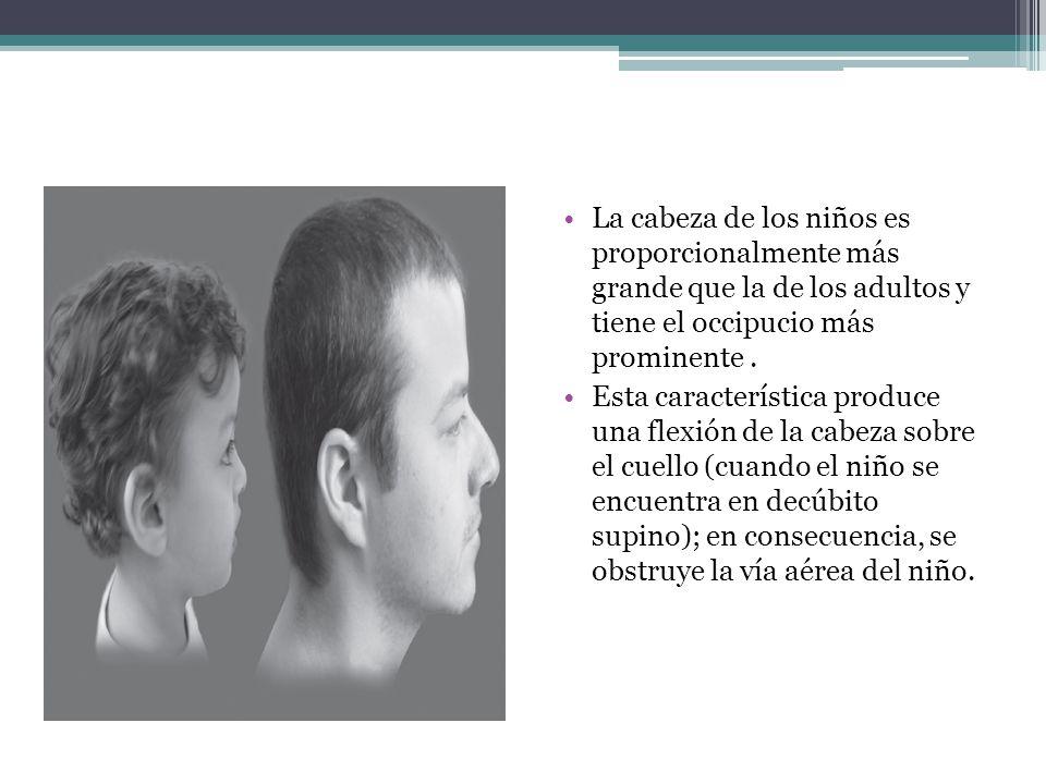 La cabeza de los niños es proporcionalmente más grande que la de los adultos y tiene el occipucio más prominente. Esta característica produce una flex