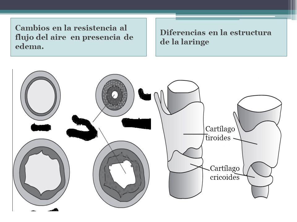 Cartílago tiroides Cartílago cricoides Diferencias en la estructura de la laringe Cambios en la resistencia al flujo del aire en presencia de edema.