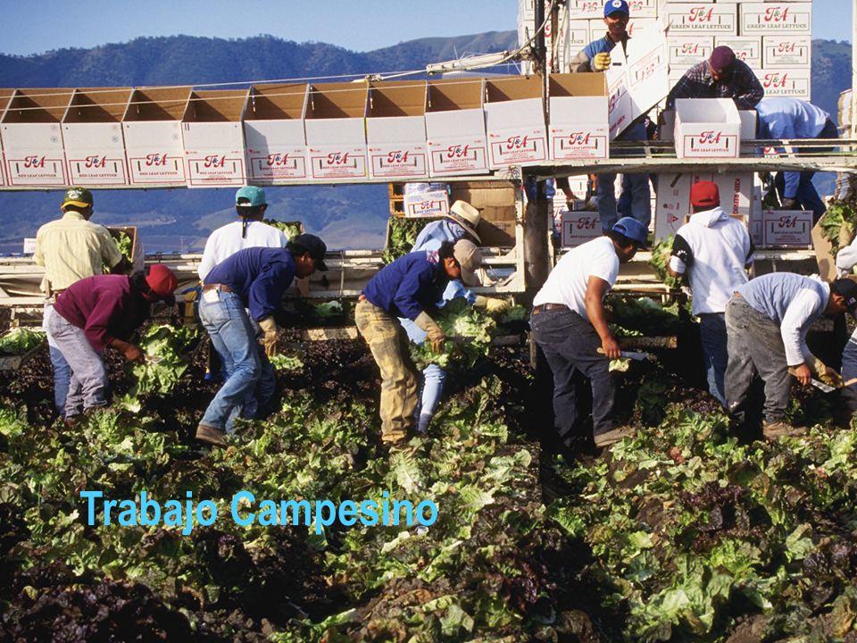 Trabajo Campesino