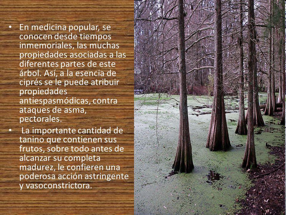 En medicina popular, se conocen desde tiempos inmemoriales, las muchas propiedades asociadas a las diferentes partes de este árbol. Así, a la esencia