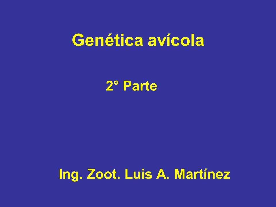 Genética avícola 2° Parte Ing. Zoot. Luis A. Martínez