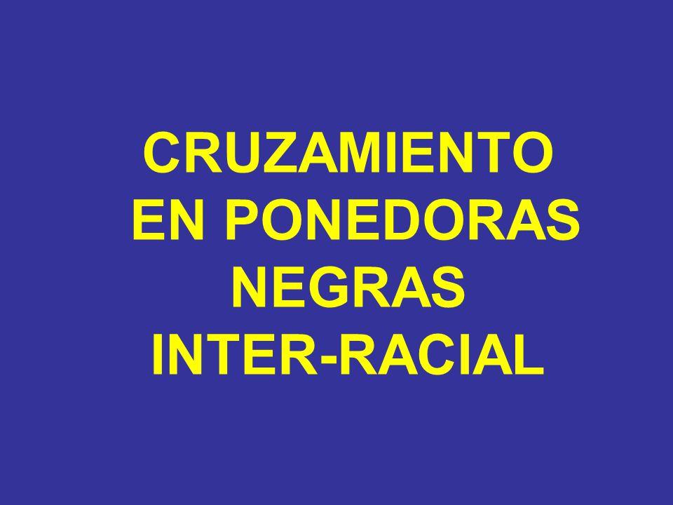 CRUZAMIENTO EN PONEDORAS NEGRAS INTER-RACIAL