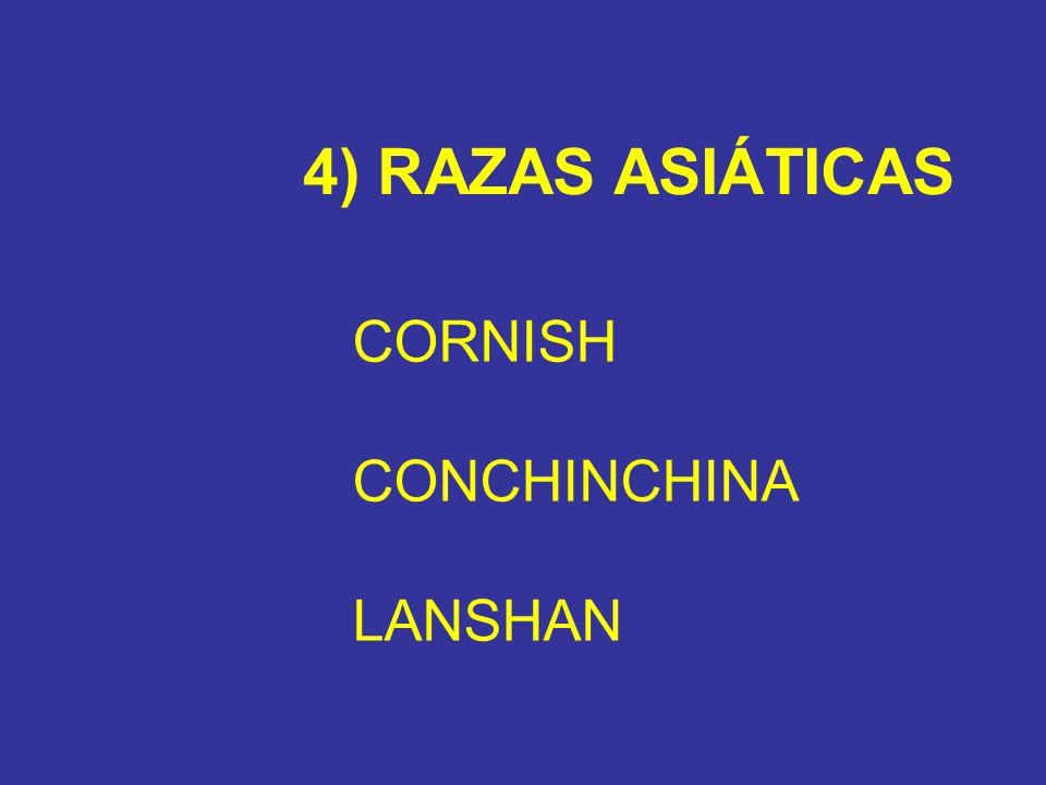 4) RAZAS ASIÁTICAS CORNISH CONCHINCHINA LANSHAN
