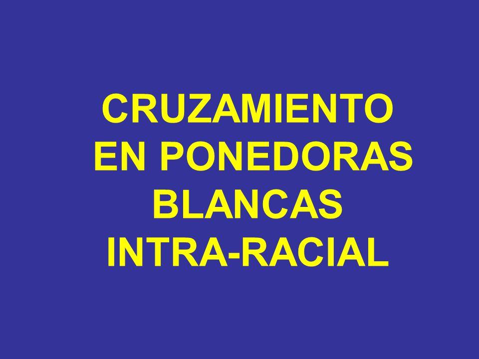 CRUZAMIENTO EN PONEDORAS BLANCAS INTRA-RACIAL