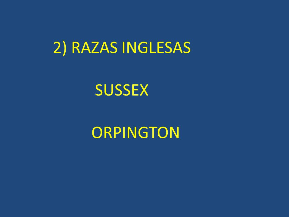 SUSSEX 2) RAZAS INGLESAS