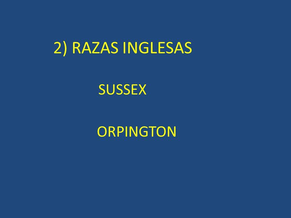 2) RAZAS INGLESAS SUSSEX ORPINGTON