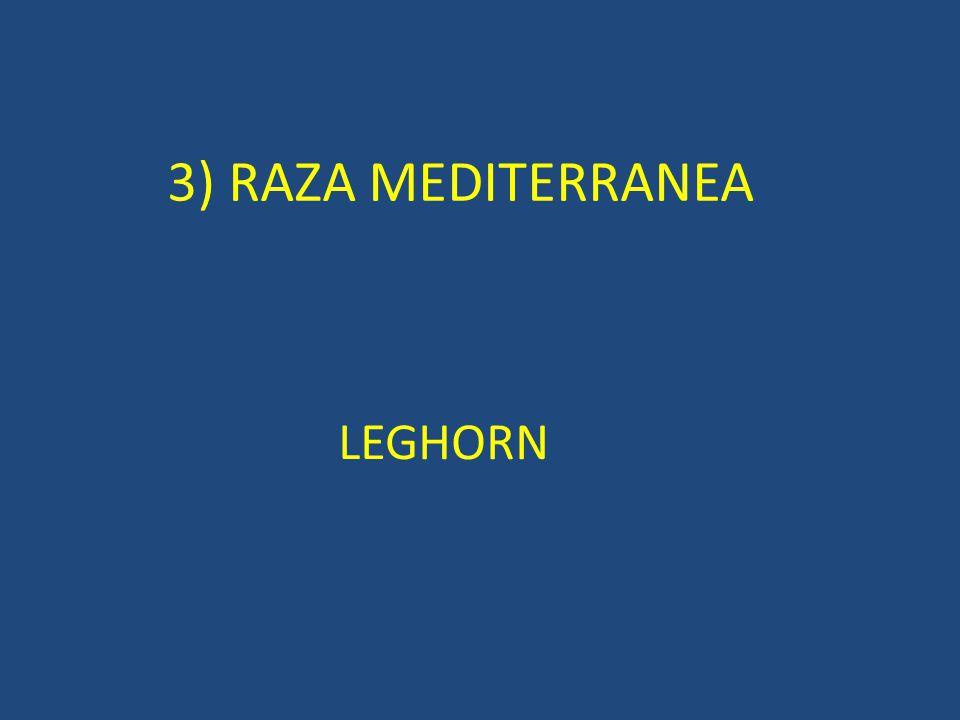 3) RAZA MEDITERRANEA LEGHORN