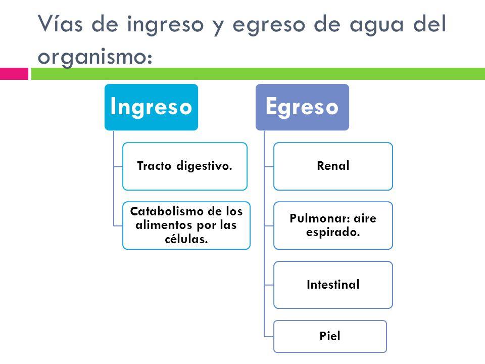 Vías de ingreso y egreso de agua del organismo: Ingreso Tracto digestivo. Catabolismo de los alimentos por las células. Egreso Renal Pulmonar: aire es
