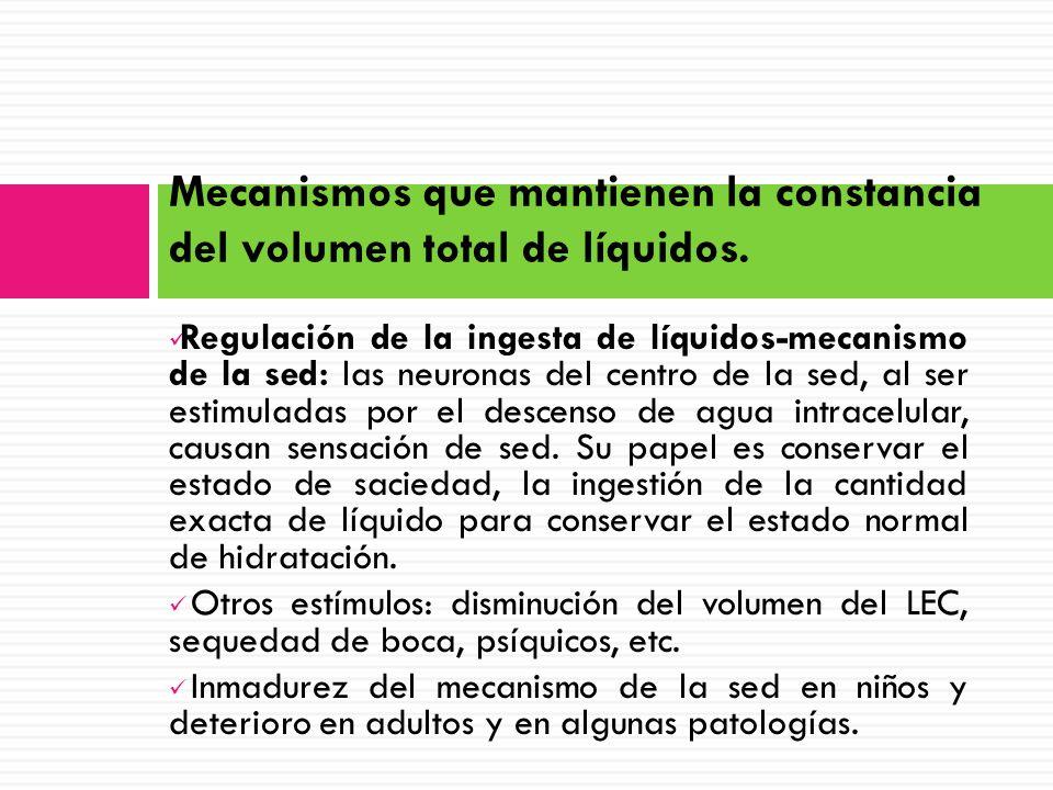 Regulación de la ingesta de líquidos-mecanismo de la sed: las neuronas del centro de la sed, al ser estimuladas por el descenso de agua intracelular, causan sensación de sed.