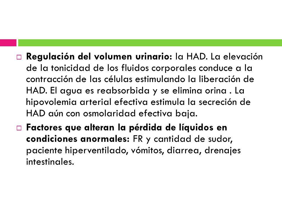 Regulación del volumen urinario: la HAD. La elevación de la tonicidad de los fluidos corporales conduce a la contracción de las células estimulando la