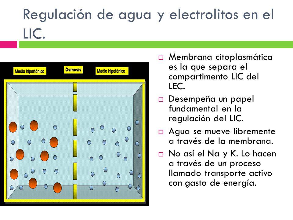 Regulación de agua y electrolitos en el LIC. Membrana citoplasmática es la que separa el compartimento LIC del LEC. Desempeña un papel fundamental en