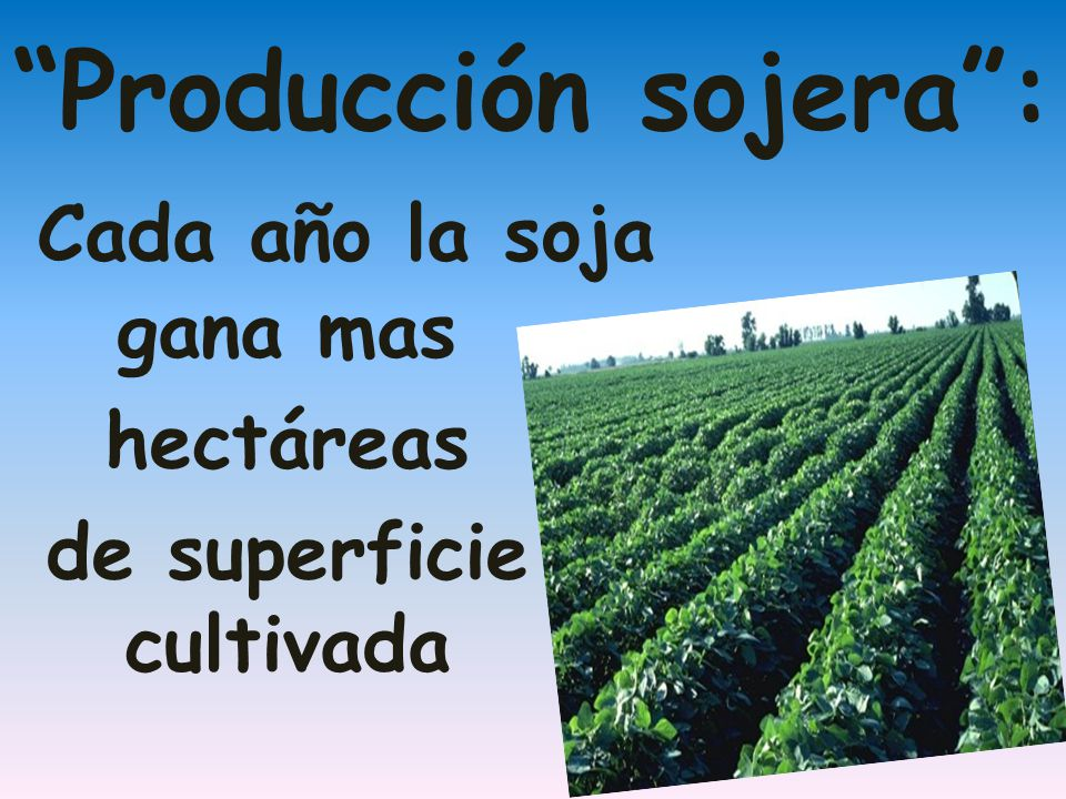 Producción sojera: Cada año la soja gana mas hectáreas de superficie cultivada